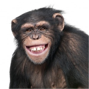 cosmos the chimp model